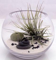 Petit bureau zen terrarium jardin kit Tillandsia par XercesArt