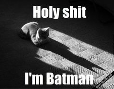 Batman Or Catwoman? this is so funny Funny Cute, Funny Shit, The Funny, Hilarious Jokes, Silly Memes, Crazy Cat Lady, Crazy Cats, Funny Animals, Cute Animals