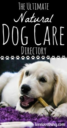 You love your dog and want to give him or her the best care - read the Ultimate Natural Dog Care Directory for some great tips on natural dog care! Embrace Pet Insurance, Cheap Pet Insurance, Health Insurance, Puppy Care, Dog Care, Care Care, Healthy Pets, Pet Care Tips, Funny Dogs