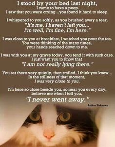 Pet Remembrance  For my Bertie