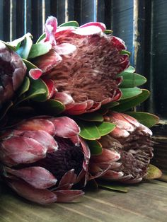 King Protea are typically on the expensive side but LAST for a really long time. They could be purchased up to TWO WEEKS before the wedding. Protea Wedding, Wedding Flowers, King Protea, Beaches In The World, Most Beautiful Beaches, Afrikaans, Calla Lily, Love Flowers, Beautiful Paintings