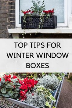 and planting advice for winter window boxes to take you through the festive period to spring and more.Ideas and planting advice for winter window boxes to take you through the festive period to spring and more. Winter Window Boxes, Christmas Window Boxes, Window Box Plants, Porch Plants, Window Box Flowers, Potted Plants, Succulents In Containers, Container Plants, Container Gardening