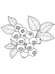 Blueberry Coloring Page From Category Select 24104 Printable Crafts Of Cartoons Nature