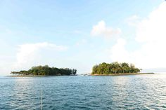 Scientists and researchers are trying to restore the biodiversity by bringing 250 over hard corals found worldwide. This will attract other marine species into the Singapore waters. In doing so, it establishes Singapore's first marine park.