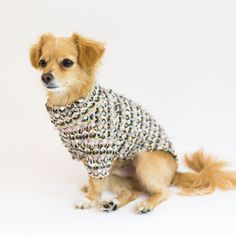 Coco Shiba Inu, Maltese, Poodle, Chihuahua, Dog Food Recipes, Wool Blend, Pets, Size Chart, Products