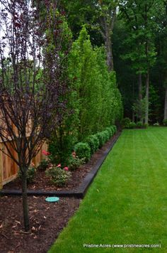 purple tree? And border along the back in front of the cedars to keep mulch in and grass clippings out...stone border instead...