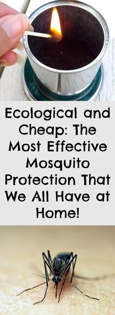 Ecological and Cheap: The Most Effective Mosquito Protection That We All Have at Home!