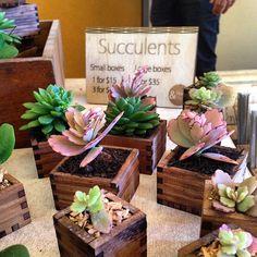 Tasmanian Blackwood Succulent Boxes @huddleandco #timberboxes