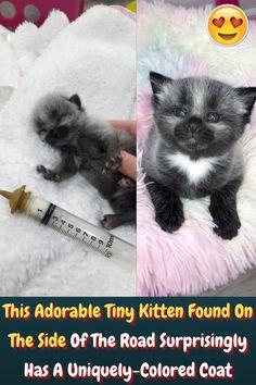 #Adorable #Tiny #Kitten #Road #Surprisingly #Colored #Coat Eye Makeup Art, Edgy Makeup, Photography Pics, Artistic Photography, Hampden Clothing, Stylist Tattoos, Tiny Kitten, Kitten Rescue, Girl Tattoos