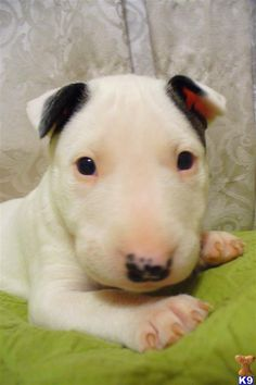 Dog Breeds | there are some dog and puppy breeds that are considered to be quite ...