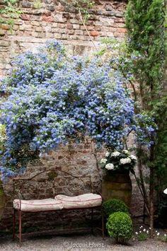 満開の花をつけるシンボルツリーの脇にベンチを置いて、フォーカルポイントに。ベンチに腰を下ろして、いつまでもお庭を眺めたくなりそうですね。