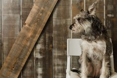 The Barn Door Veterinary Care - Willow Veterinary Care, Vancouver, Dog Cat, Barn, Doors, Animals, Converted Barn, Animales, Animaux