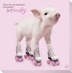 In the Pink Pig Calendars