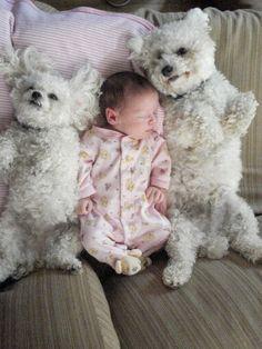 cuddle puppies!