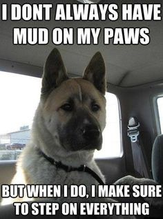 I don't always have mud on my paws, but when I do, I make sure to step on everything.
