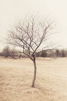 """Saatchi Art Artist Claire Harvey; Photography, """"Lone Tree This Winter 