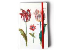 Four Tulips with insects - Artist: J. Marrel