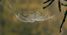 Dew, Spider Web, Dawn, Branch, Autumn, Morning, Non Urban Scene, Tree (Plant), Germany, No People, Sunshine, Europe (Continent), Stock Footage,