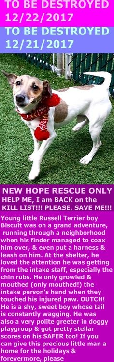Hello, my name is Biscuit. My animal id is #16069. I am a male white dog at the Manhattan Animal Care Center. The shelter thinks I am about 1 years 4 months old. I came into the shelter as a stray on 14-Dec-2017. http://nycdogs.urgentpodr.org/biscuit-16069/