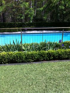 "✔ 25 suitable plants grow beside swimming pool 15 > Fieltro.Net""> 25 Suitable Plants Grow Beside Swimming Pool -"