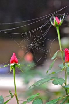 The Intricacy and Beauty of Spider Webs Spider Art, Spider Webs, Ronsard Rose, Illustration Photo, Crazy Quilting, Macro Photography, Bokeh, Belle Photo, Beautiful World