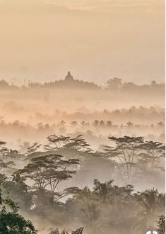 Hedge Trees, Places To Travel, Places To Go, Borobudur Temple, Buddhist Art, Yogyakarta, Places Of Interest, Aerial View, Mother Earth