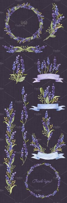Watercolor set with Lavender Flowers - Illustrations