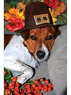 Happy Thanksgiving Puppy!