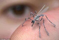 Is this a mosquito? It's an insect spy drone. It can be remotely controlled and is equipped with a camera and a microphone. It can land on you, and it may have the potential to take a DNA sample or leave RFID tracking nanotechnology on your skin. It Drone Technology, Technology Gadgets, Tech Gadgets, Cool Gadgets, Science And Technology, Futuristic Technology, Medical Technology, Future Gadgets, Energy Technology