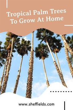 Add a tropical flare to your home! Palm trees are fun to grow and care fore. #palmtree #treegrowing #tropicaltree #treeseed Seeds For Sale, Tree Seeds, Garden Guide, Garden Seeds, Botanical Gardens, Beautiful Gardens, Palm Trees, Flare, Tropical