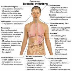 Microbiology!