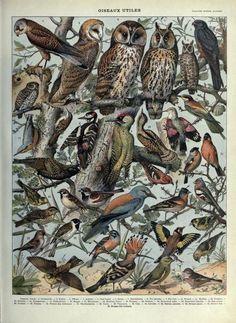 nemfrog: Oiseaux utiles. Useful birds. Larousse mensuel illustré. March 1914.