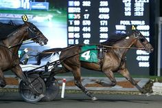 Canadian Trotting Classic & Maple Leaf Trot September 17th 2016. Three breeds   One vision. Working together for a strong horse racing industry in Ontario Harness Racing, Local Events, Community Events, Horse Racing, Ontario, Special Events, Horses, Classic, Fun