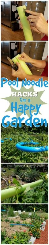 Why You Should Use Pool Noodles In Your Garden (Pool Noodle Gardening