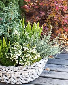 Fall Flowers, Gardening, Nature, Plants, Outdoors, Ideas, Lawn And Garden, Autumn Flowers, Outdoor
