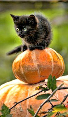 Fall Kitty <3