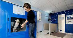 Dog Washing machine for pets la lavatrice per cani e gatti