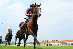Racing and Sports has horse racing information, racing news, racing results for racing australia and sports news. Lancaster Bomber, Thoroughbred Horse, Racing News, Horse Racing, Sports News, Horses, Animals, Animaux, Animales