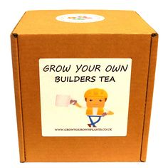 Grow Your Own Builder's Tea Plant Kit - Planting kit for children and adults Tea Plant, Evergreen Shrubs, Garden Gifts, Grow Your Own, Planting, Kit, Children, Birthday
