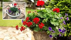 A thriller, spiller, and a filler: pick 3 of each kind of plants, and design a gorgeous container garden. Click here for the how-to.