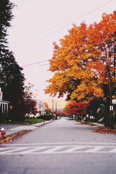 Photo (wonder / wander) – Autumn & Winter ♡ - To Have a Nice Day Autumn Day, Hello Autumn, Autumn Leaves, Fall Winter, Autumn Trees, Fallen Leaves, Seasons Of The Year, Best Seasons, Haunted Tree