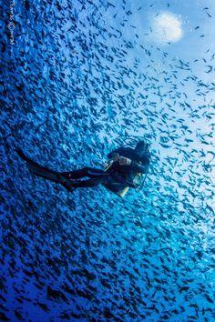 Scuba diving...