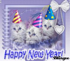 happy new year cats Happy New Year Emoji, Happy New Year Funny, Happy New Year Pictures, Happy New Year 2015, Happy New Years Eve, Happy New Year Quotes, New Year Wishes Cards, Happy New Year Cards, Happy New Year Greetings