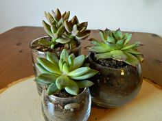 succulents in glass bowles