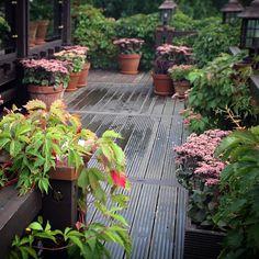 Очиток видный в ландшафном дизайне популярен давно. Мы высаживаем этот массивный многолетник в горшки и контейнеры на деревянных террасах, патио и площадках у дома. Агротехника при посадке в контейнеры отличается от посадки в грунт. Используем две методики: Читать далее на сайте. Plants, Gardening, Lawn And Garden, Plant, Planting, Yard Landscaping, Planets, Horticulture