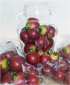 Bag of 24 1 12  1 34 Artificial Pomegranet or Crab Apples Jar Not Included Great Holiday Decorations *** Check this awesome product by going to the link at the image.