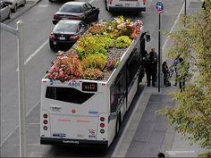 Un artiste new-yorkais travaille depuis quatre ans à développer des bus sur le toit desquels poussent des végétaux.