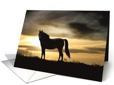 Sympathy cards for loss of horse - Horse Sympathy Cards