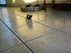 Smallest Dog in the World! - YouTube