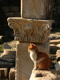 Cat Among the Ruins of Ephesus. Cats were worshiped in Egyptian culture, but that is certainly not the only culture in which they were influential. Cats, especially great cats, are frequently seen as important figures in Greek mythology. They were often the object of transformation in cases where the Gods elected to transform a mortal to do their bidding or to punish a human for their crimes.